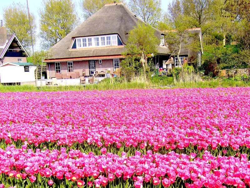 Appartement Tulp Appartementenboerderijnieuwesluis.nl