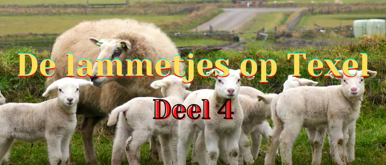 Lammetjes op Texel - deel 4