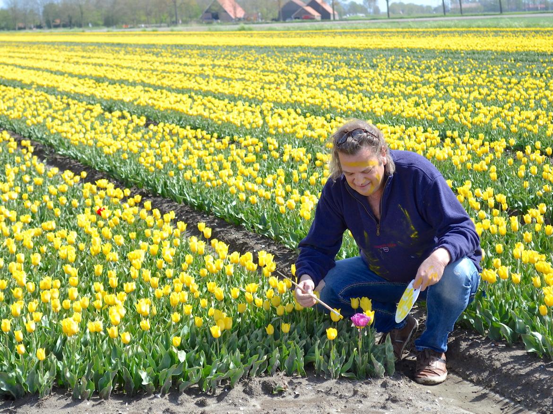 Ed Pach MijnVakantiehuisJouwVakantiehuis.nl tulpen