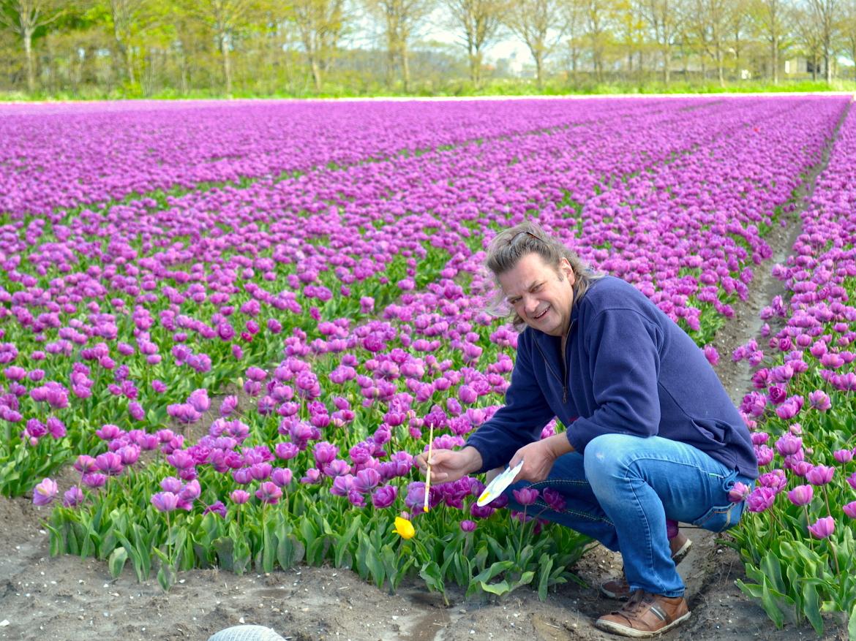 Ed Pach tulpen MijnVakantiehuisJouwVakantiehuis.nl