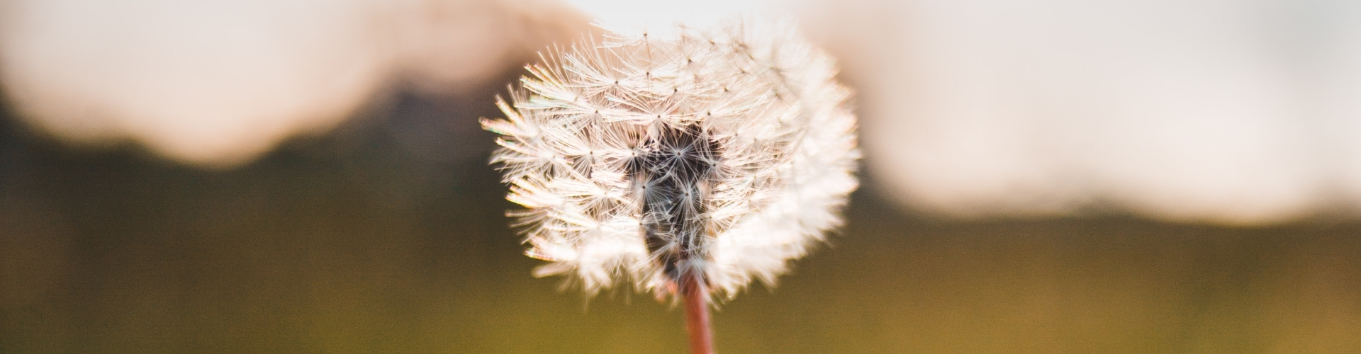 Wandelen, mindfulness en ademhaling
