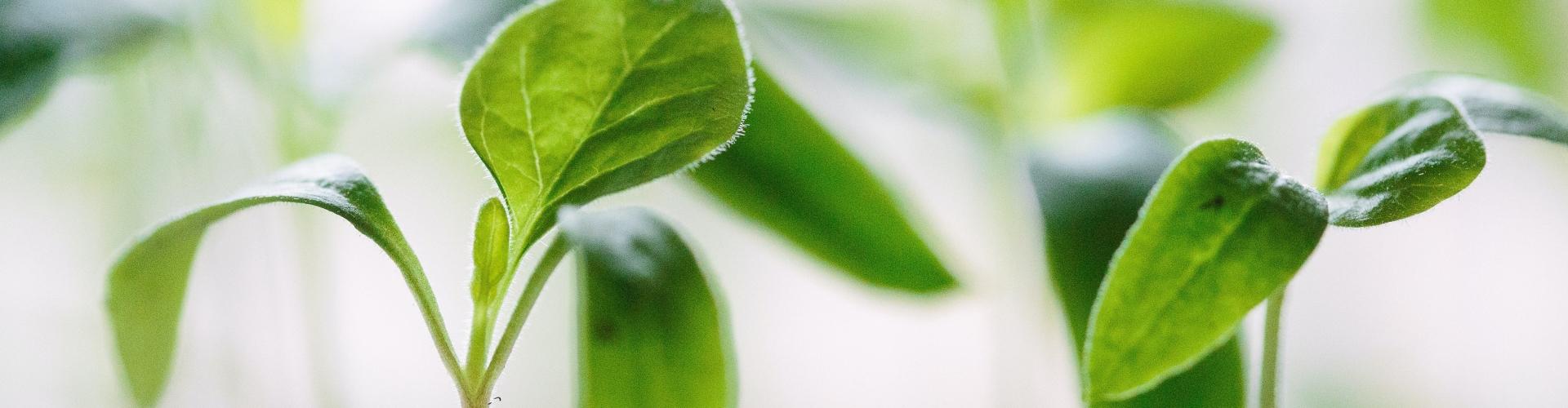 ecologisch alternatief voor potgrond