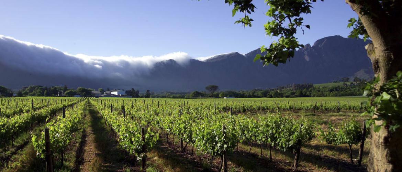 Wijnproeven met het mooiste uitzicht van de Kaapse Wijnlanden