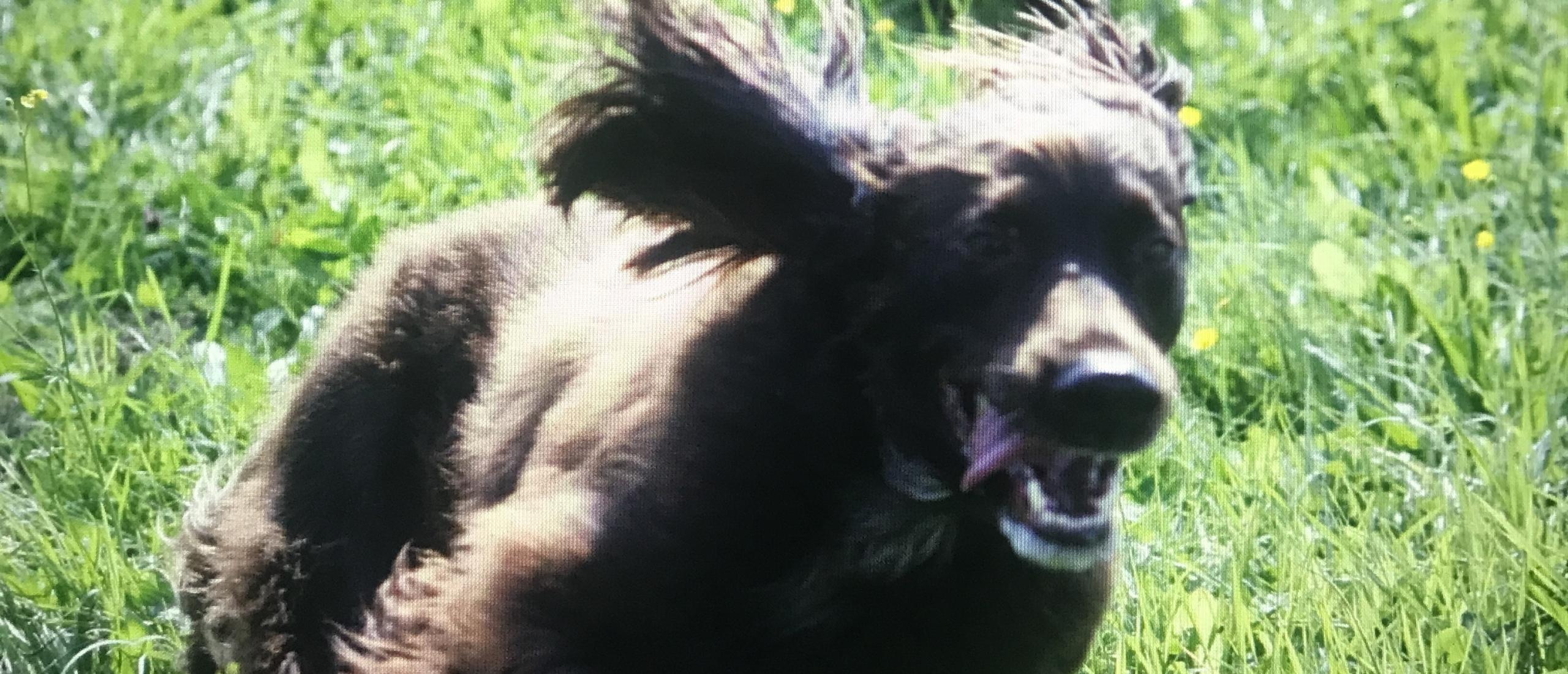 De overeenkomsten tussen jagende honden en vechtende ex-partners….