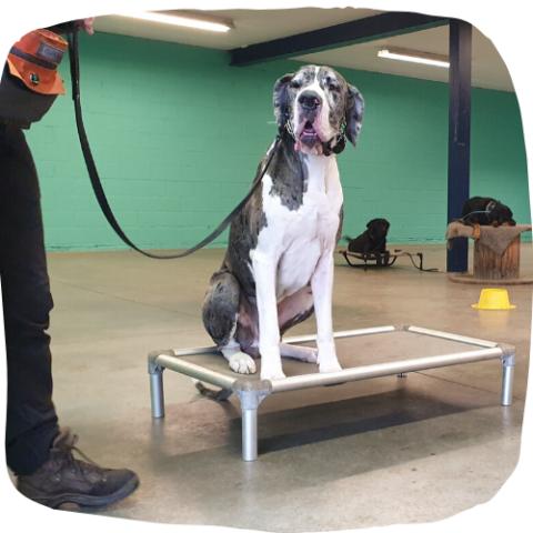 prive hondentraining hondenschool Duitse korthaar