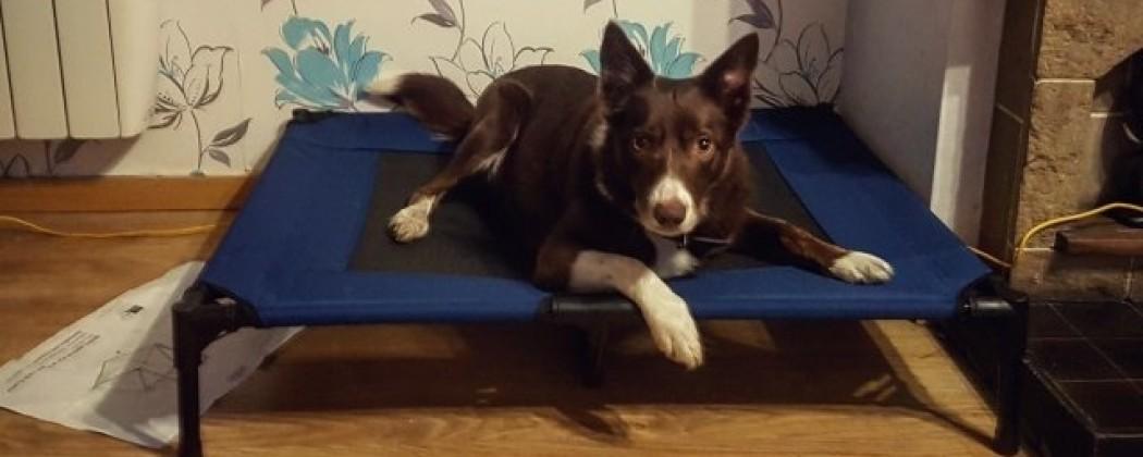 Waarom jouw hond 'plaats' leren?