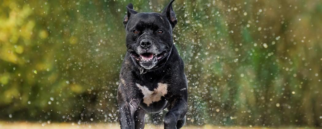 Uw hond leren loslopen