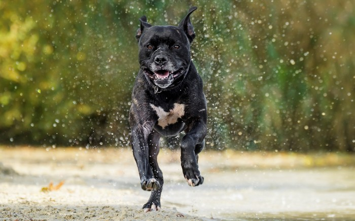 hondentraining volwassen honden