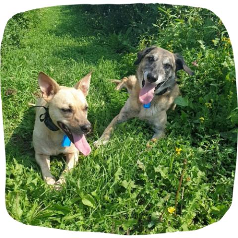 hondentraining hondenschool straathonden