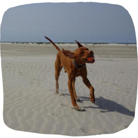 hondenschool viszla