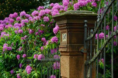 rhododendron langer laten bloeien