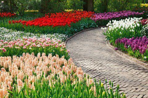 verschillende bloembollen door elkaar planten