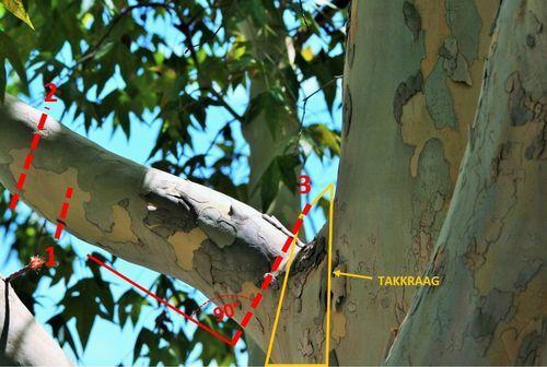 hoe een boom snoeien