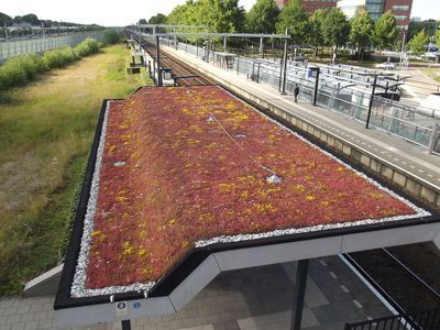 Sedum op het dak