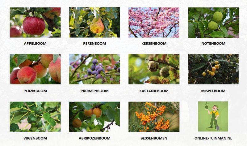 welke fruitbomen groeien in nederland