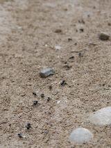 Beste mierenpoeder