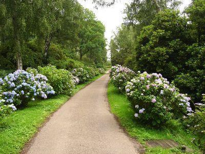 Hortensia planten afstand