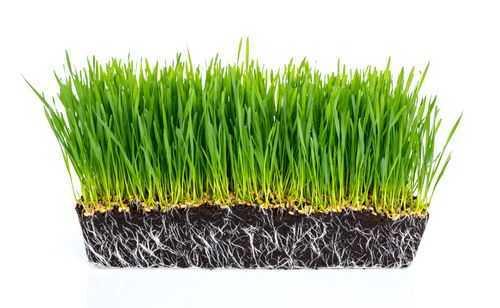 graszoden groeien niet vast oplossing
