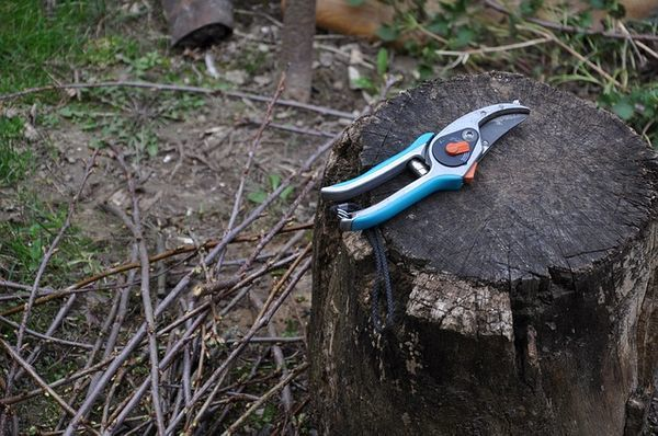 gereedschap olijvenboom snoeien