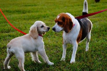 2 honden aan de lijn