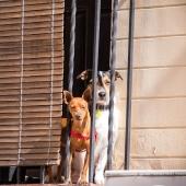 2 honden achter hek