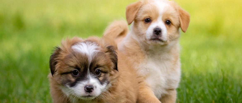 2 puppy's