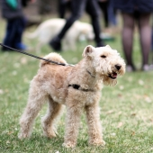 blaffende hond aan de lijn