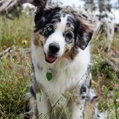 grappige hond
