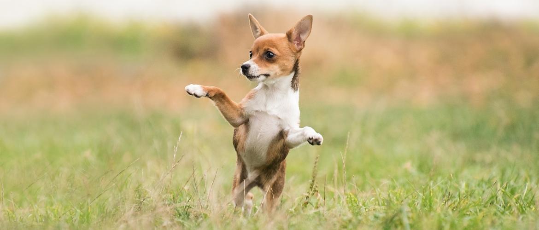 Jouw hond meer keuzes geven zorgt voor minder stress en meer rust!