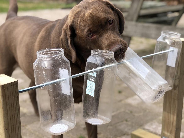 hersenwerkje hond