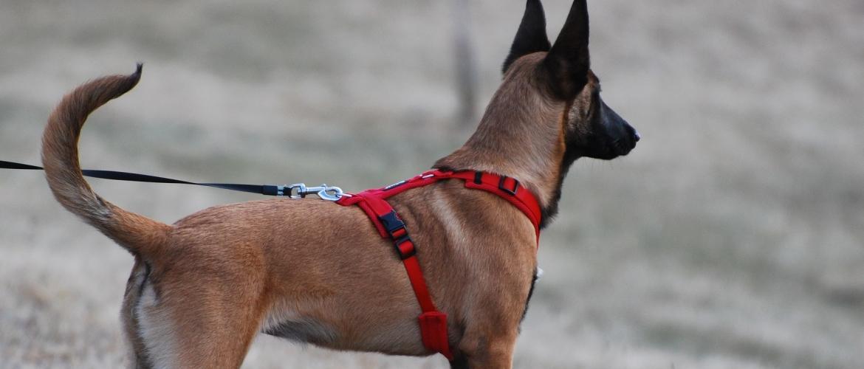 Blaft jouw hond naar van alles en nog wat tijdens jullie wandelingen?