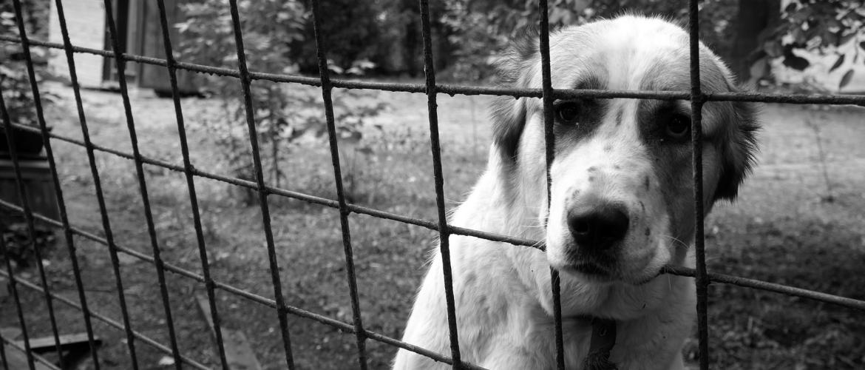 hond Bench