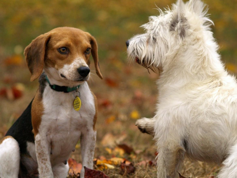 hond dominant naar andere hond