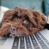 hond en laptop