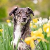hond gele bloemen
