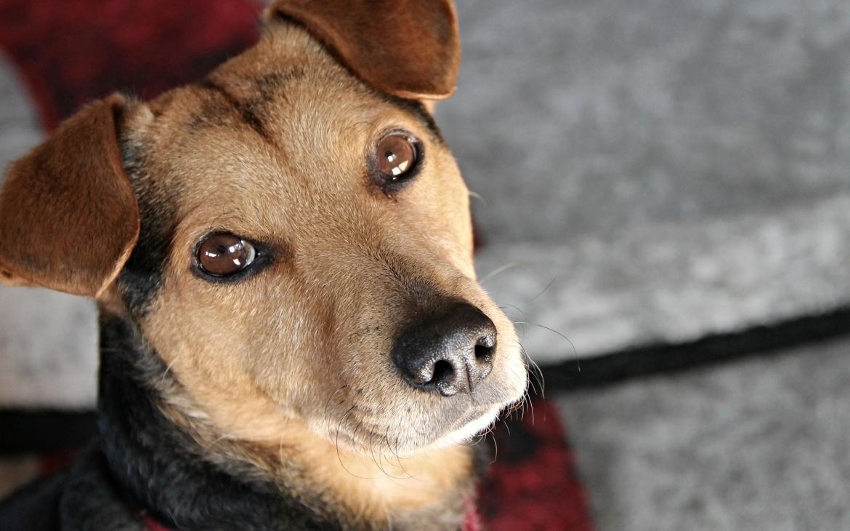hond gezicht
