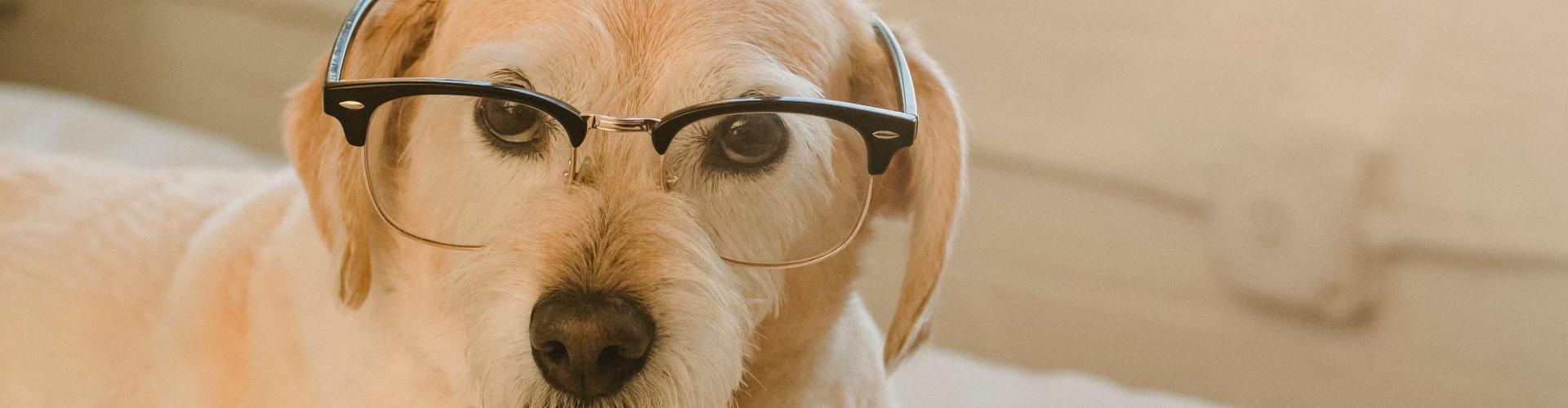 hond met boek