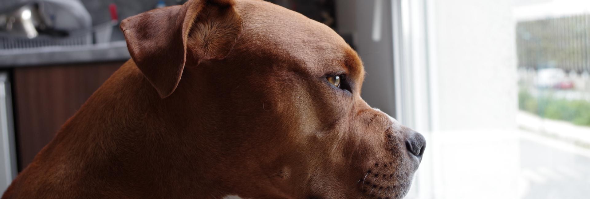 hond raam