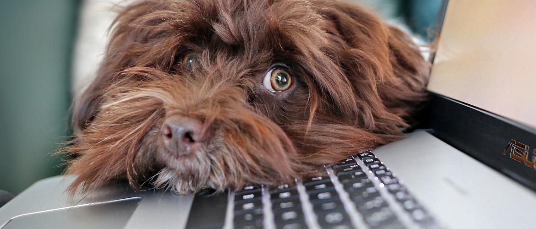 Is online begeleiding iets voor jou en jouw hond?