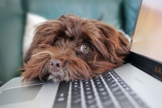 hond toetsenbord