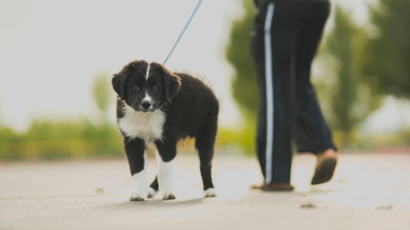 hond wandelen 12