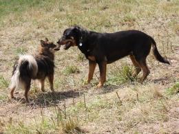 honden ontmoeten elkaar