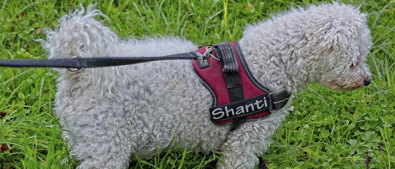 trainingshalsband voor je hond