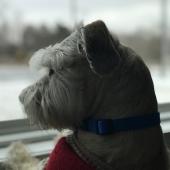 hondje voor het raam
