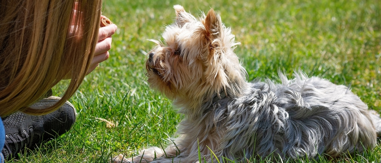 je hond positief opvoeden