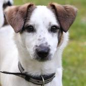 kleine hond wit hoofd