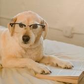 lezende hond