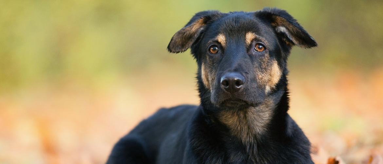Het verhaal van Luna, blaffen naar andere honden