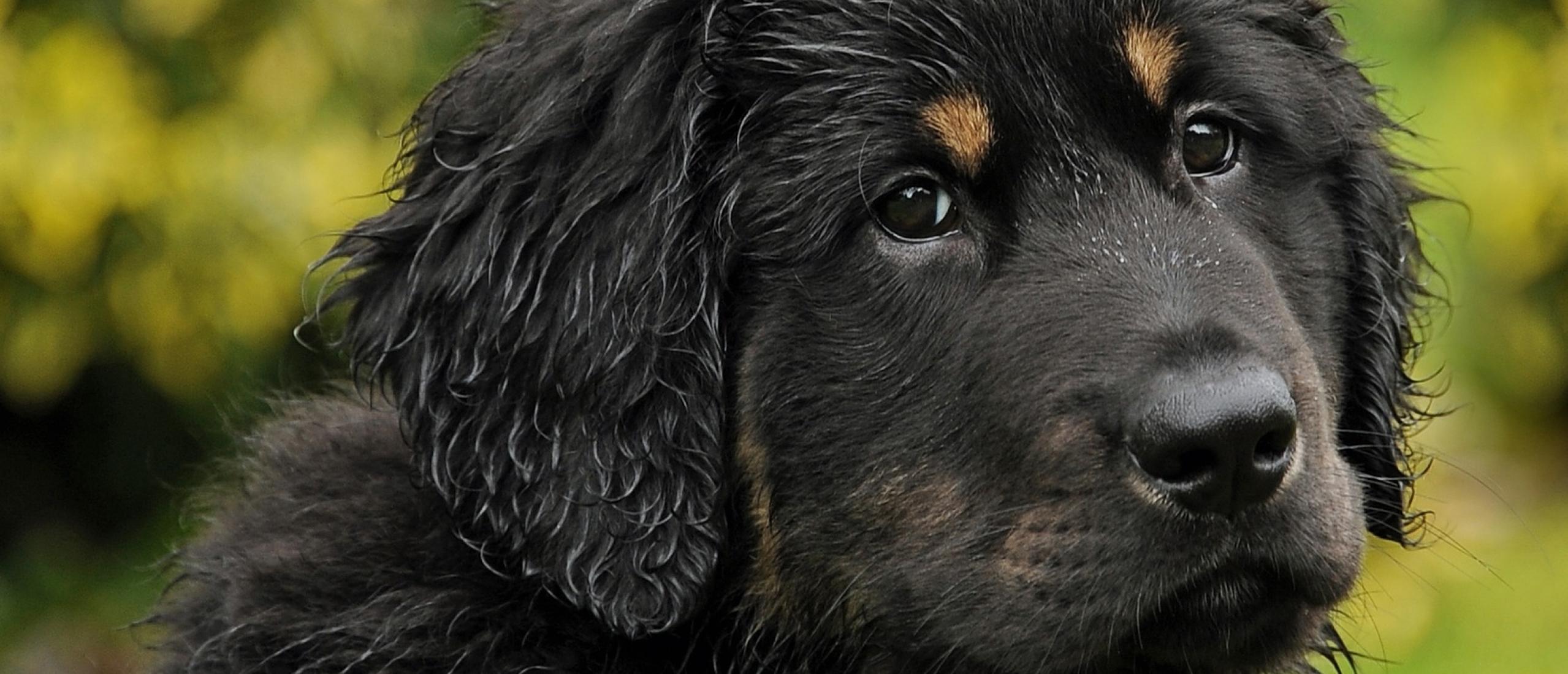 Gedrag van jouw hond: voor jou ongewenst, voor je hond een oplossing?