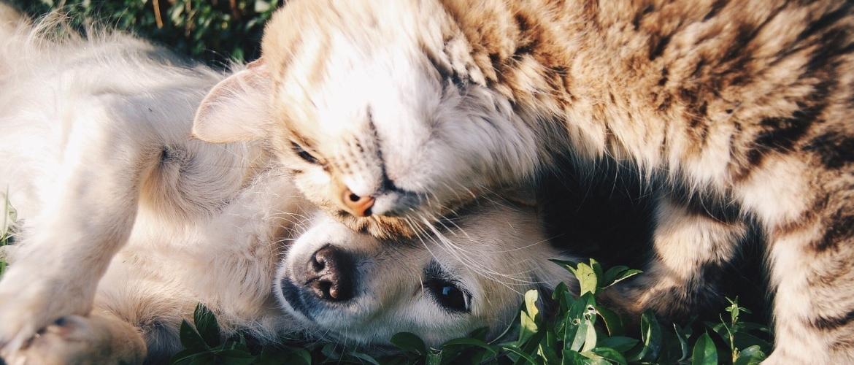 pup en kat